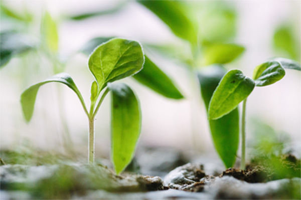 Business Development Seedlings